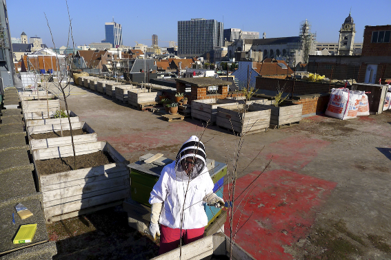 city honeybees in the rooftopgarden
