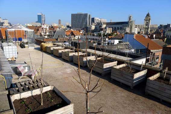 rooftop farm, topshot