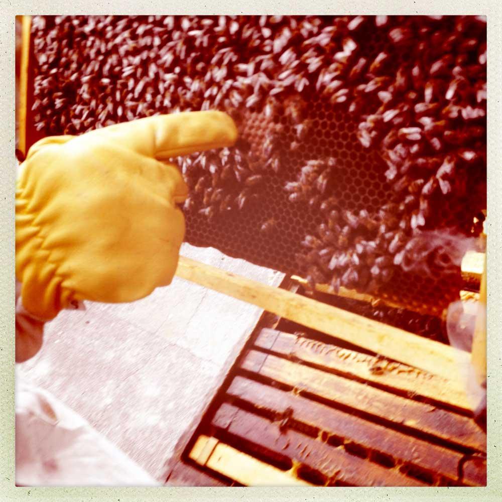 BCN bees