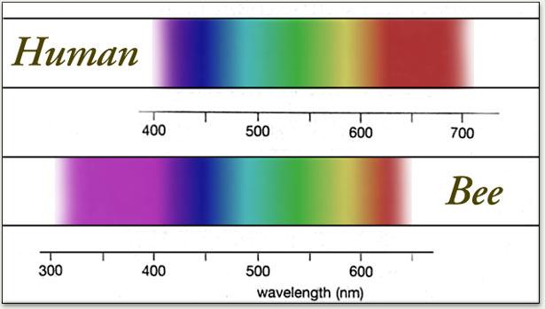 bee spectrum