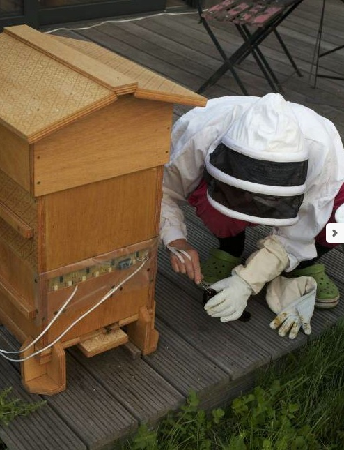 studying dead bees