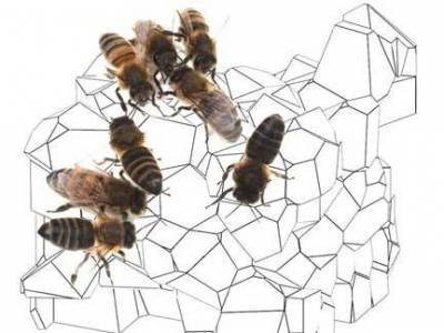 bees, cells