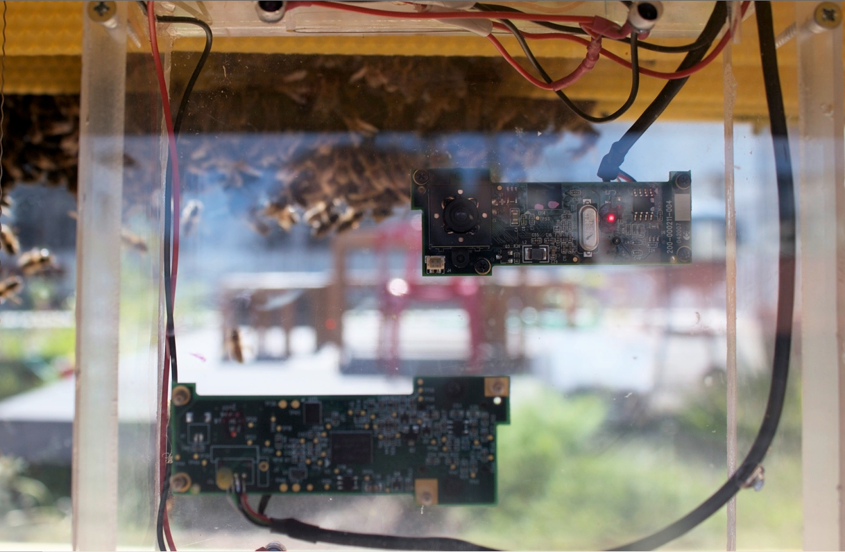 webcams in the hive