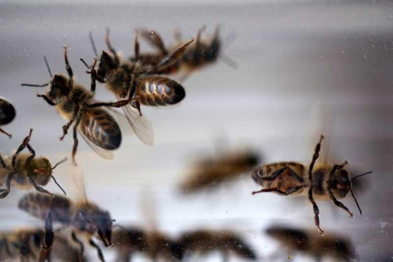 bees, tube