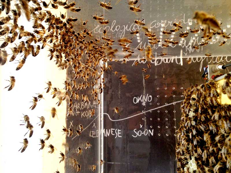 blackboard bees