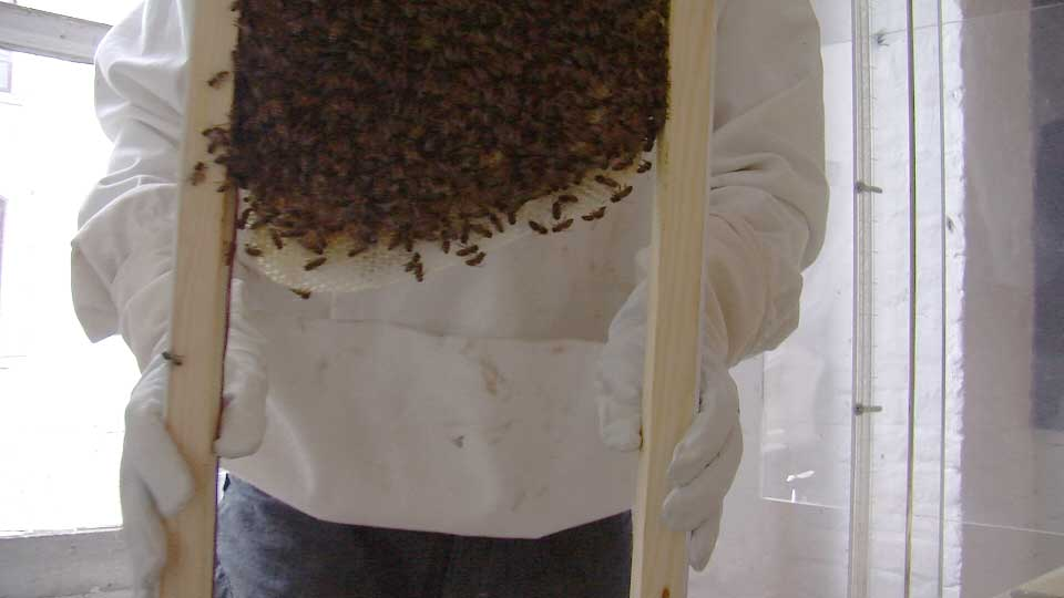 intervention of the beekeepers