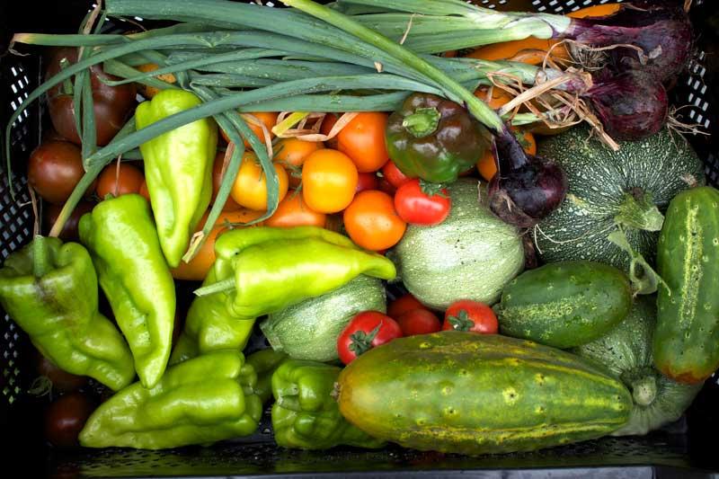 summer 2012, harvest