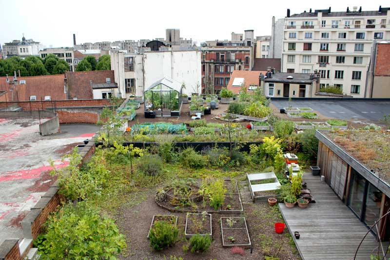 rooftopgarden 6 august 2012