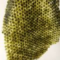 algae-skin.jpg