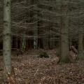 budagarden-trees.png
