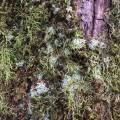 tree_bergen_05.jpg