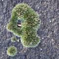 moss-opengreen.jpg