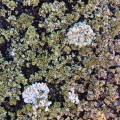 lichen_rooftopbxl_01.jpg