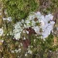 tree_bergen_02.jpg