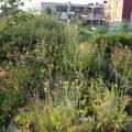 kamperfoelie, wilde venkel, wilde lavendel en andere bee-plants
