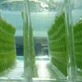 ijsblokzakjes-algenreactor.png