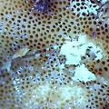 budagarden-mushroom.png