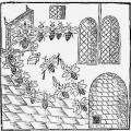 parliament_of_bees._woodcut_fronispiece_john_day_1641.jpg