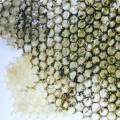 moss_algae.jpg