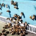 bees executing their first spring-flights (4 march 2013)