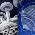 dome-mushroom.jpg