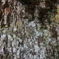 tree_bergen_01.jpg