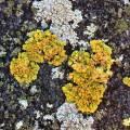 lichen_rooftopbxl_02.jpg