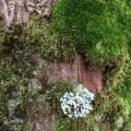 tree_bergen_03.jpg