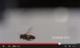 bee:screen_shot_2014-10-18_at_09.43.19.png