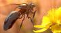 bee:screen_shot_2014-05-20_at_12.46.51.png