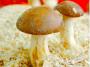 fungi:mycology-lab.png