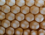 guerillahives:forms1:closecomb.png