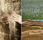 intelligent_beehives:flax.png