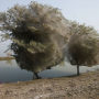 materialscience:spiderwebtrees.png